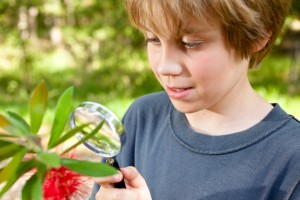 Elementary age boy inspecting with magnifying glass plant insect
